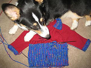 Doggiesweater